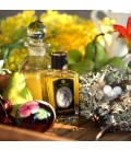 Hummingbird Zoologist Perfumes