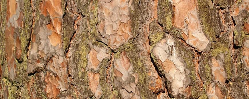 древесные ноты