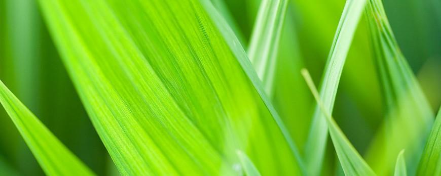 зеленые ноты